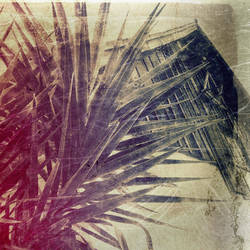 untitled (palm and adobe wall)  Jim Ferreira