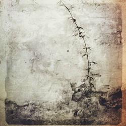 untitled (broken wall)  Jim Ferreira