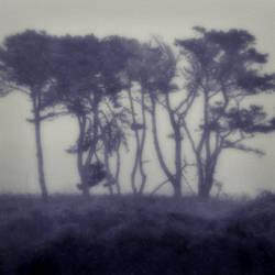 untitled (tangled trees) Jim Ferreira