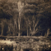 untitled (forest edge) Jim Ferreira
