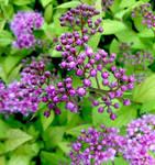 Little Purple Flowers by JenX-Photo