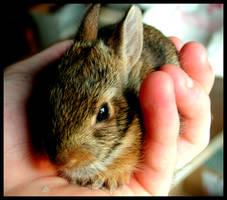 rabbit by wasureru