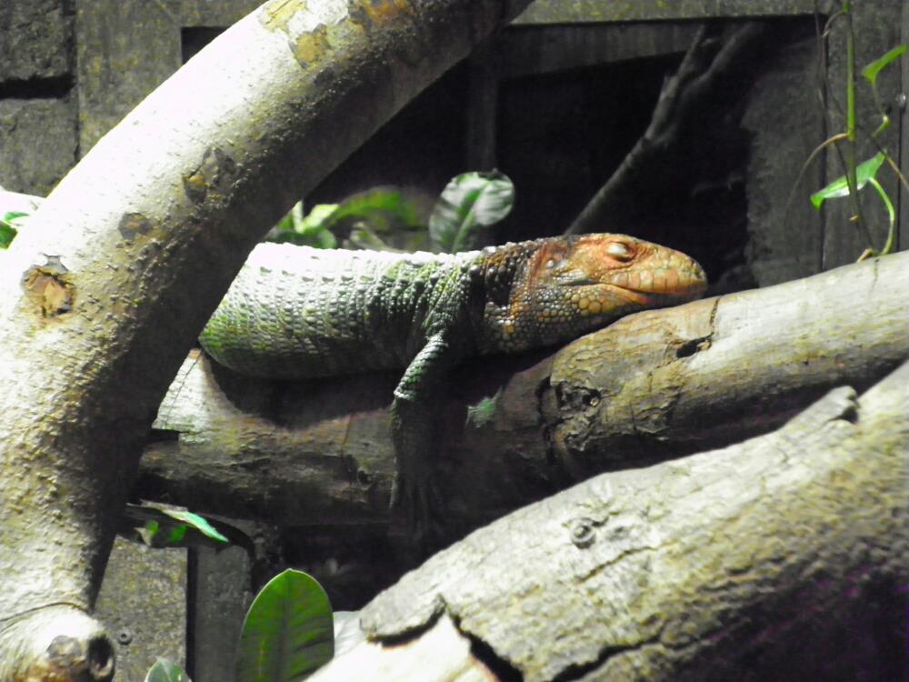 Lizard by emobear