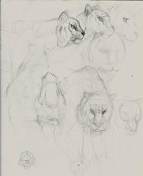 Terrblie Tiger Practice