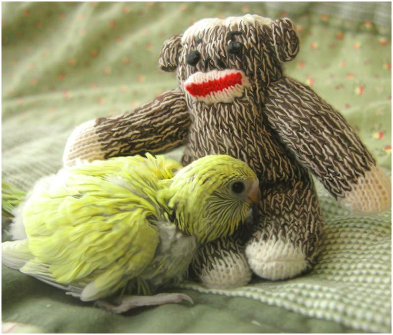 Baby Bird by Karma021