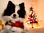 Widgette in the holiday spirit by ChristianRagunton