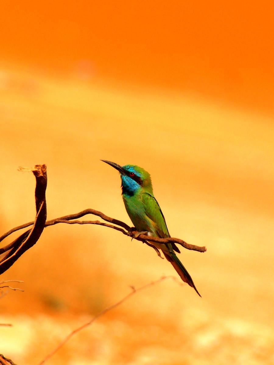 Desert Bird 2 by mhmalali