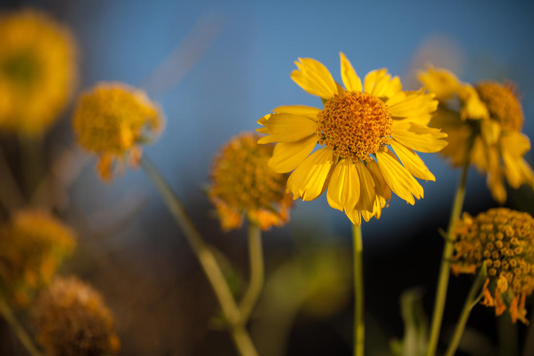 Yellow Flower I by mhmalali