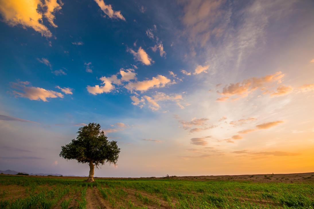 Tree Under the Sky by mhmalali