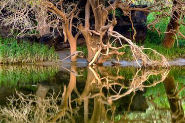 Reflection I by mhmalali