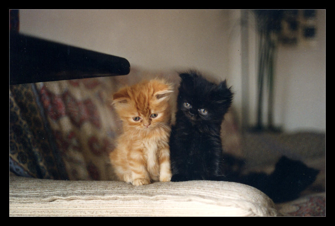 Maji svatki za gnjaviti...[Ne zamerite mi...] My_little_kitties___5_by_Golubaja