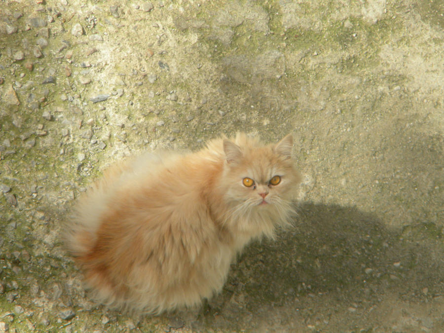 Blonde Cat Nude Photos 36