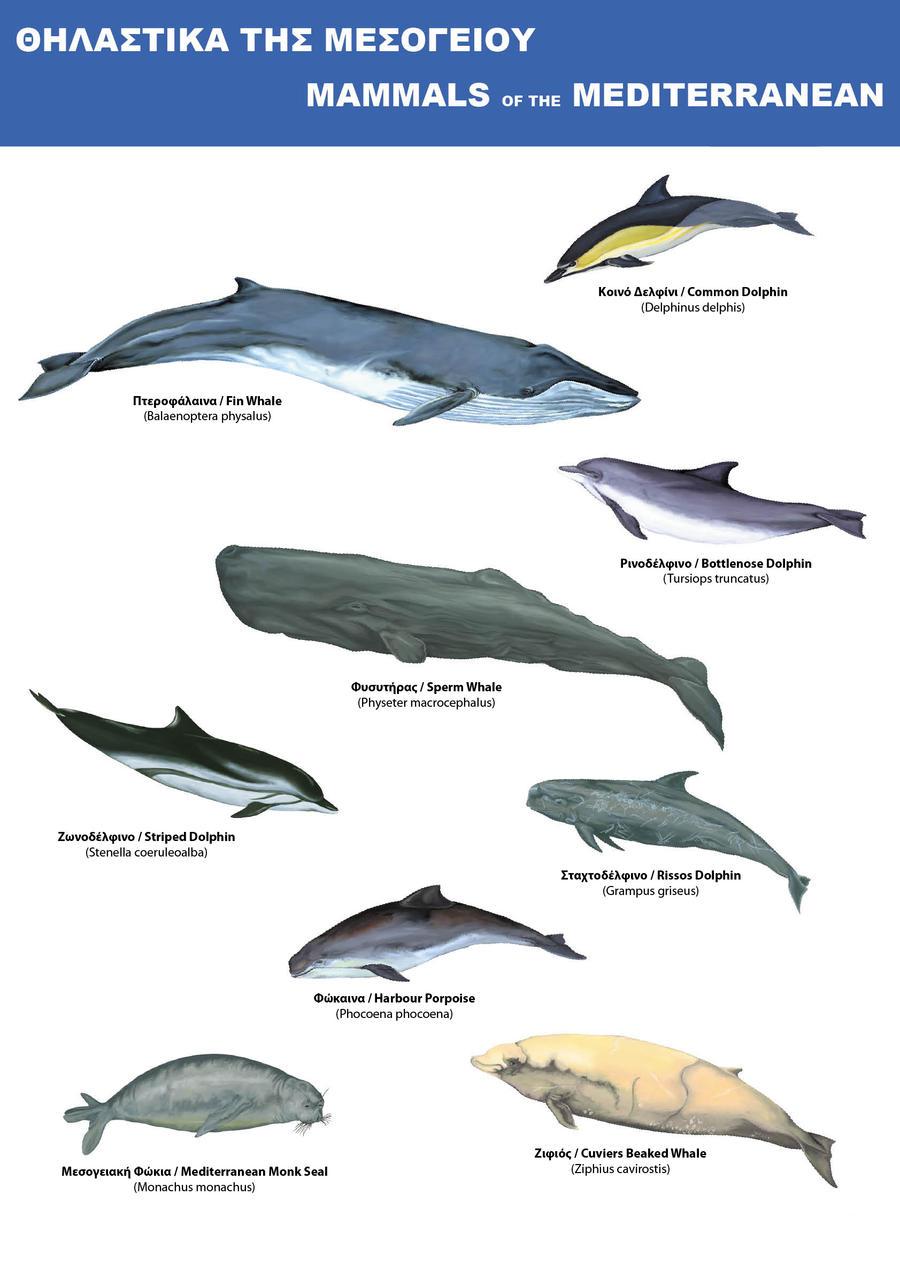Marine mammals pictures - photo#20