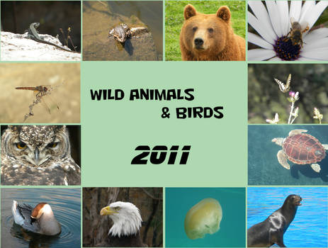Calendar 2011 Frontpage