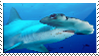 Hammerhead Shark Stamp by kailor