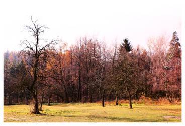 in the field by soulseed