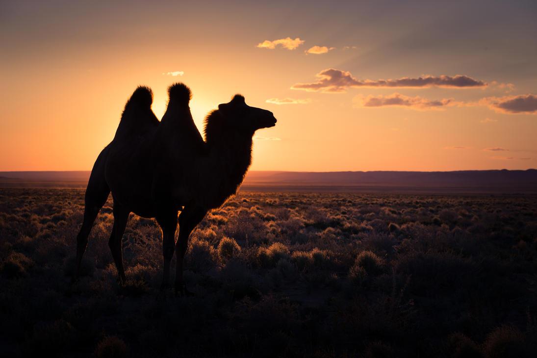 desert sunset by antiKoerper01