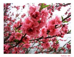 Sakura by PixelShader