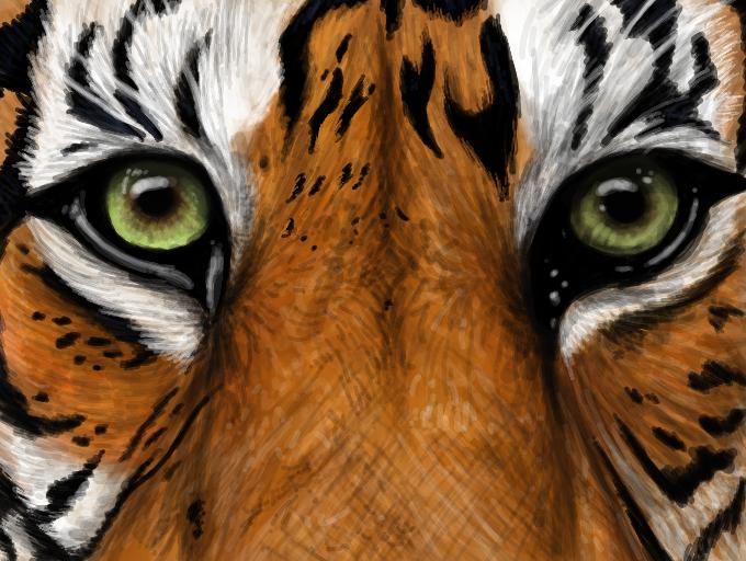 Sumatran Tiger by MCRWolfeh