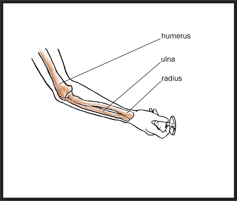 Anatomy: Pronation/Supination Frame 1 by lesseli on DeviantArt