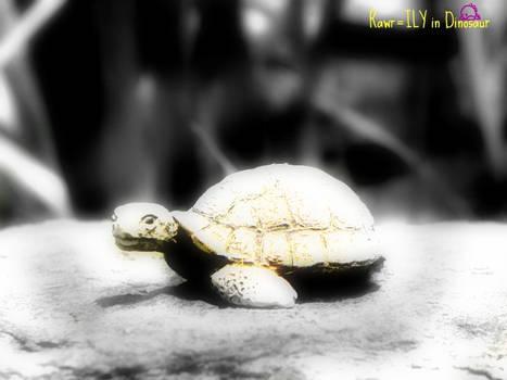 Turtle :D