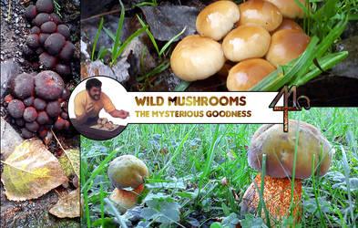 Wild Mushrooms by MaestroTomberi
