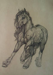 Clydesdale mix by WhiteLiesArt
