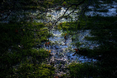 Reflected by PandaGoesRawr