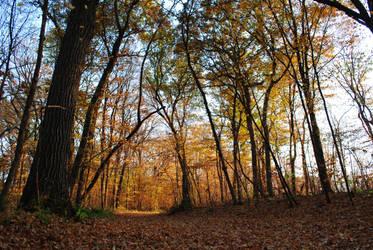 Autumn Walk by PandaGoesRawr