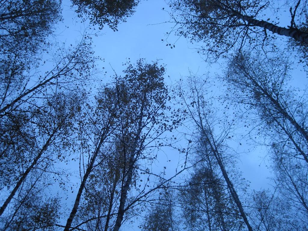 Above by ChiuuChiuu