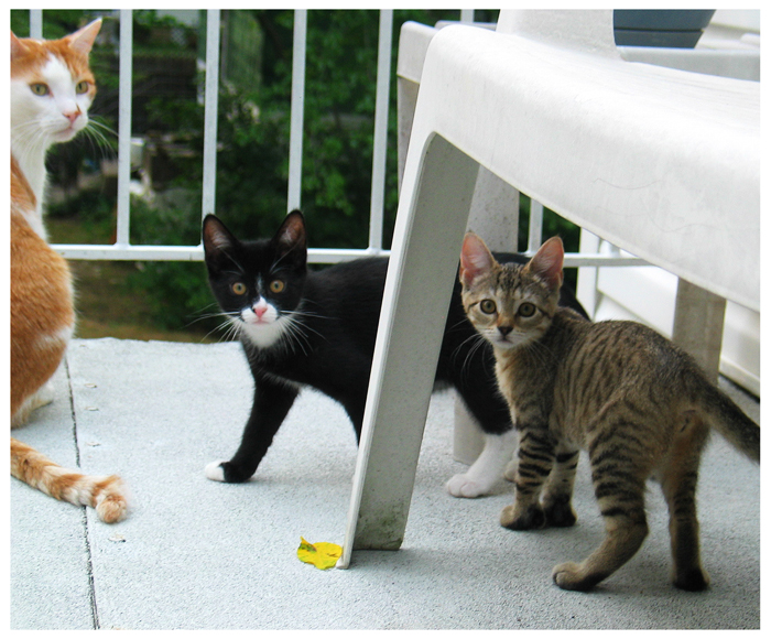 Feral Cat Had Kittens In My Garage