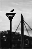 Dark bird by OliverJules