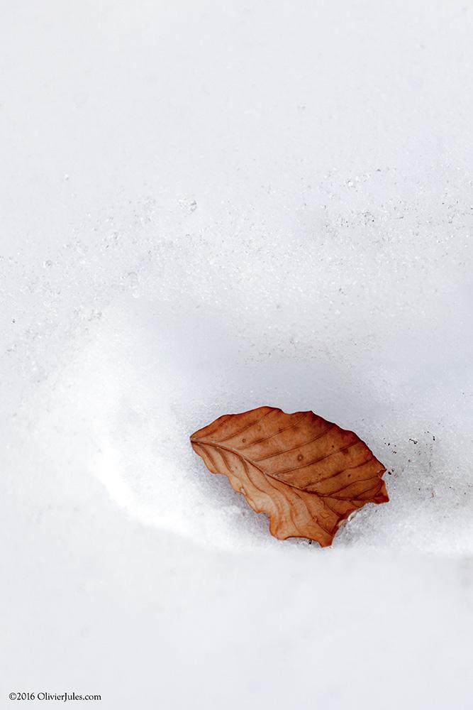 Foglia nella neve by OliverJules