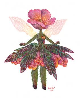 Poppy fairy