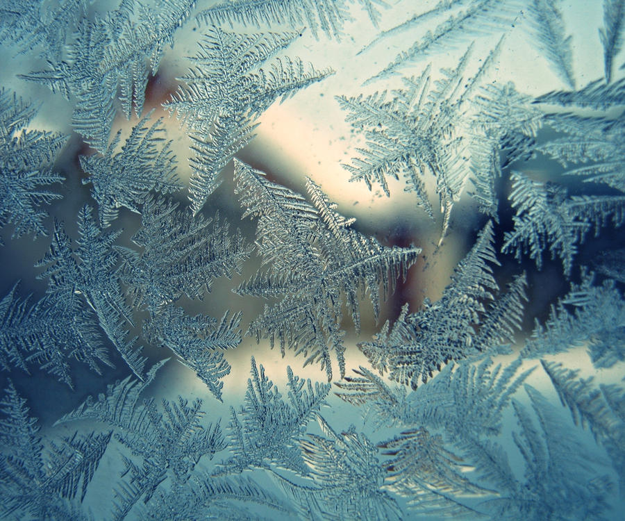 ...ice flowers... by possey
