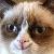 Grumpy Cat smile
