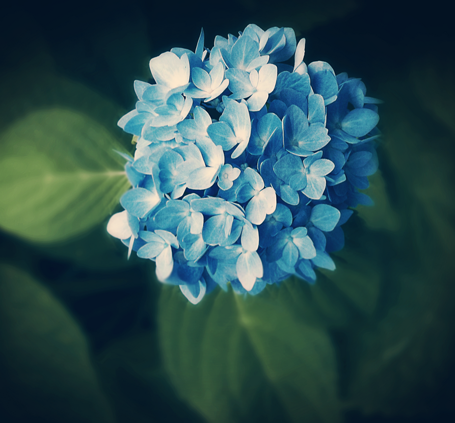 Little Blue by damilepidus