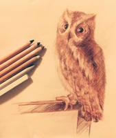 Sketch Scops Owl by Crateris