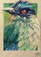 170816-20 ACEO I see you by Crateris