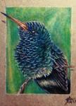 170828-21 ACEO Bee Hummingbird