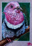 171115-24 ACEO Pink + TIME-LAPSE