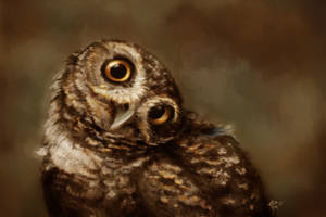 Cute burrowing owl + stream by Crateris