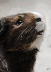 Digital art: Guinea pig portrait by Crateris