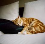Tank love Pillow