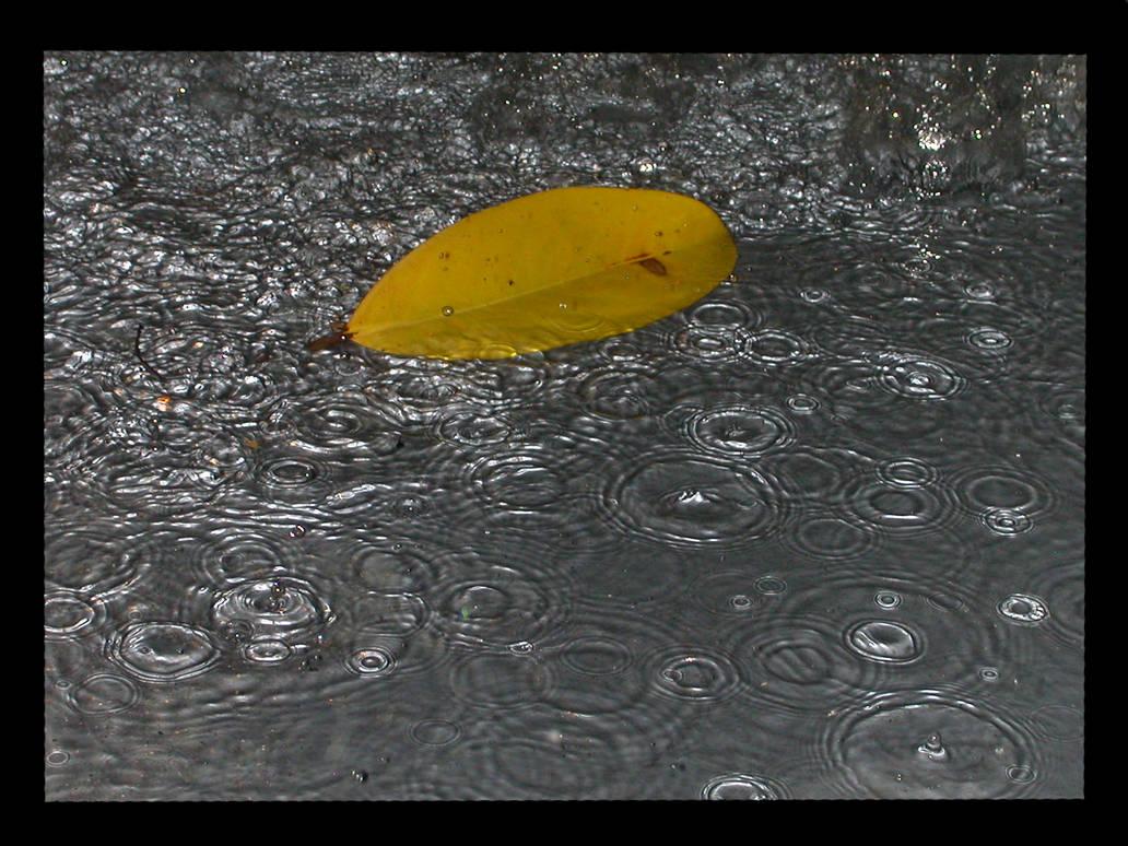 The Lone Leaf by Kyra-Wolf