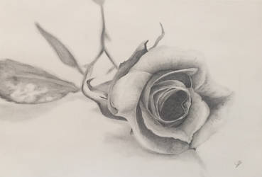 Rose made with graphite by Wendy0