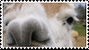 Llama Stamp by Marbletoast