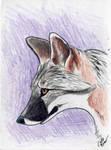 Gray Fox Card