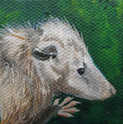 Virginia Opossum by Marbletoast