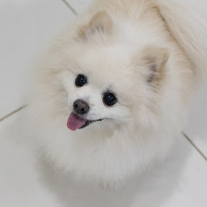 spiffyspitz's Profile Picture